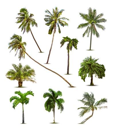 Illustration pour Different tropical palm trees. Vector - image libre de droit