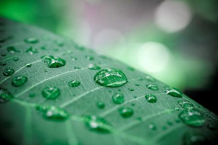 Photo pour Rain drops on green leaf. Macro shoot - image libre de droit