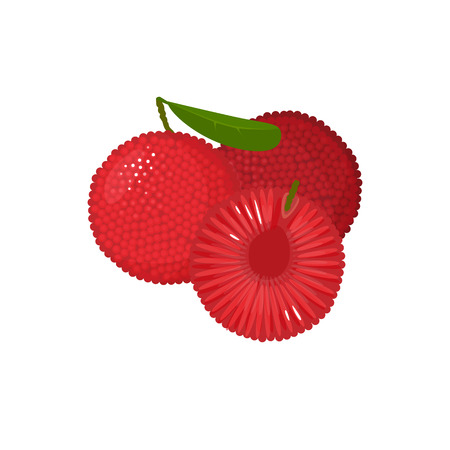 Illustration for yumberry isolated on white background. Bright vector illustration of colorful half and whole of juicy yumberry. Fresh cartoon - Royalty Free Image