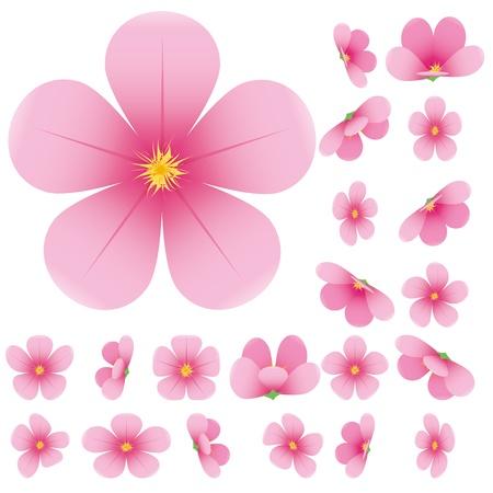 Cherry blossom, flowers of sakura, set, pink, flowers collection,