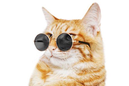 Photo pour Closeup portrait of funny ginger cat wearing sunglasses isolated on white. Shallow focus. - image libre de droit