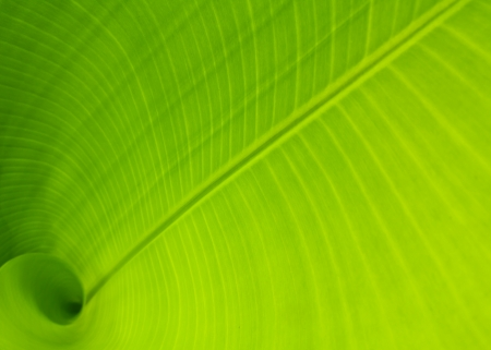 Banana leaf use as background