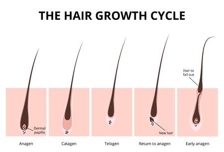 Illustration pour Hair structure - image libre de droit