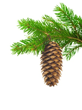 Photo pour Spruce branch with cone on a white background - image libre de droit