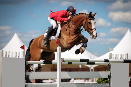 Photo for Equestrian Sports - Royalty Free Image