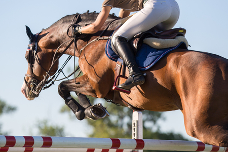 Foto de Equestrian Sports, Horse Jumping Events - Imagen libre de derechos