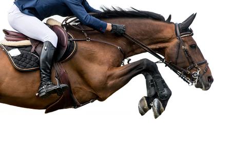 Foto de Horse Jumping, Equestrian Sports, Isolated on White Background - Imagen libre de derechos