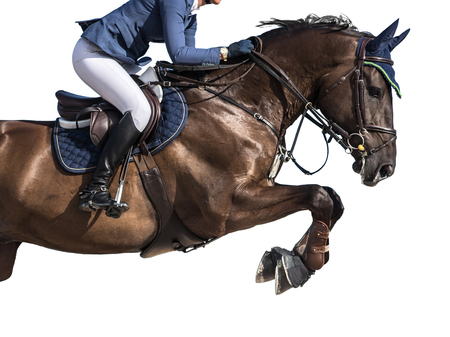 Photo pour Equestrian Sports, Horse Jumping Event, Isolated on White Background - image libre de droit