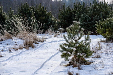 Photo for romantic gravel road in winter tree forest with sunlight and shadows - Royalty Free Image