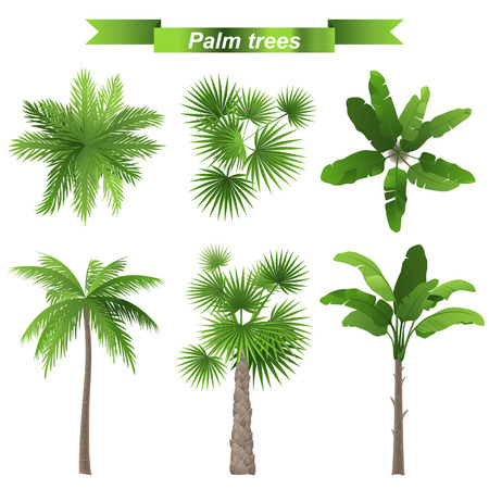 Illustration pour 3 different palm trees - top and front view - image libre de droit