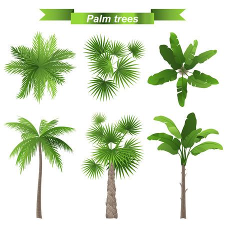 Ilustración de 3 different palm trees - top and front view - Imagen libre de derechos