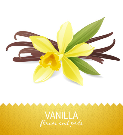 Illustration for vanilla flower and pods over white background - Royalty Free Image