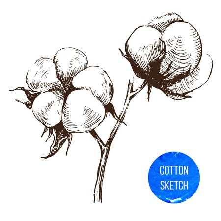 Illustration for Hand drawn cotton brunch in vintage style - Royalty Free Image
