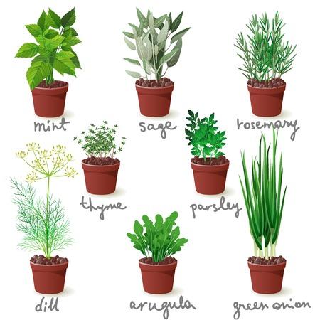 Ilustración de 8 different herbs in pots - Imagen libre de derechos
