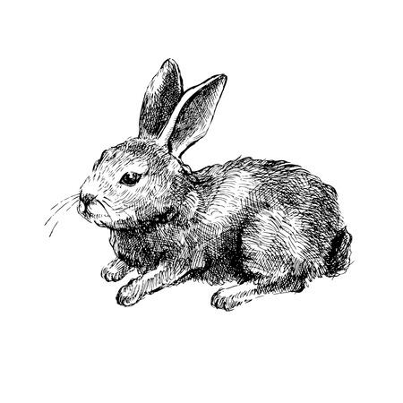 Illustration pour Hand drawn rabbit on white background - image libre de droit