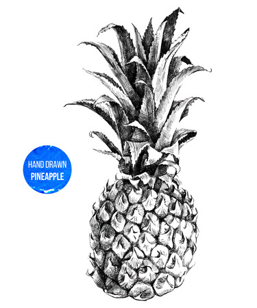 Illustration pour Hand drawn pineapple in color - image libre de droit