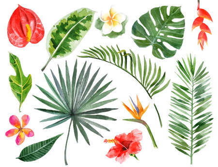 Illustration for Large hand drawn watercolor tropical plants set - Royalty Free Image