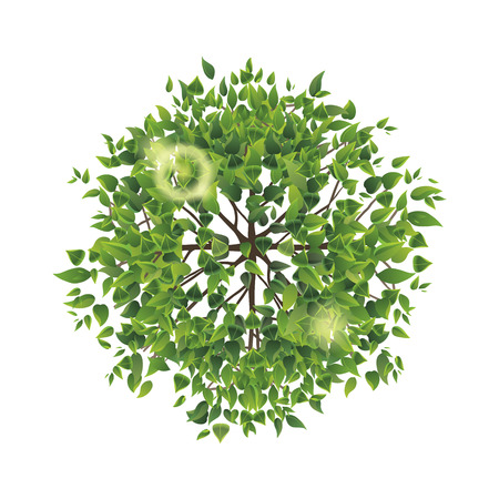 Illustration for Summer tree top view. Easy to use in your landscape design projects - Royalty Free Image