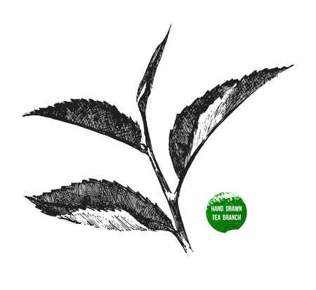 Ilustración de hand drawn tea leaf on white background - Imagen libre de derechos