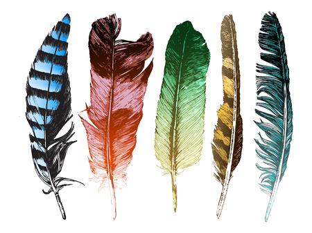 Illustration pour 5 colorful hand drawn feathers on white background - image libre de droit
