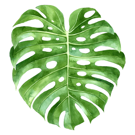 Illustration for Watercolor monstera plant green leaf - Royalty Free Image