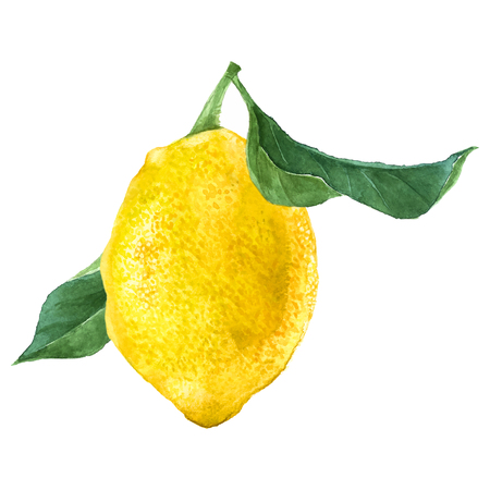 Illustration pour Watercolor lemon fruit - image libre de droit