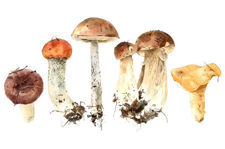 Illustration for Hand drawn watercolor mushrooms - Royalty Free Image