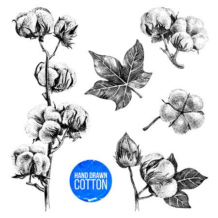 Ilustración de Hand drawn set of cotton - Imagen libre de derechos