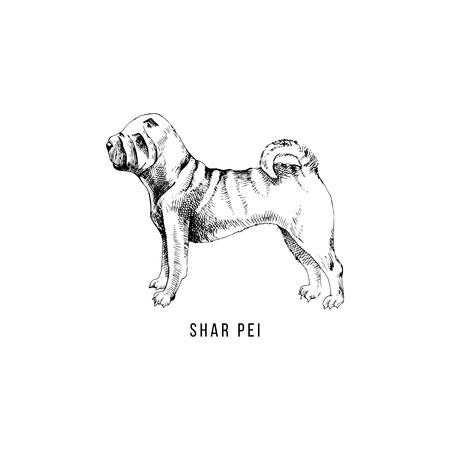 Illustration for Hand drawn Shar Pei - Royalty Free Image