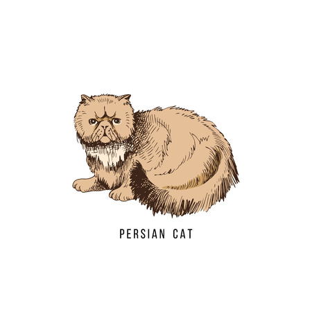 Illustrazione per Hand drawn persian cat - Immagini Royalty Free