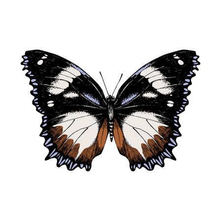 Illustration for Hand drawn butterfly on white - Royalty Free Image