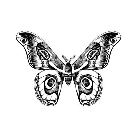 Illustration pour Hand drawn black and white butterfly - image libre de droit