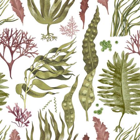 Illustration for Seamless pattern with hand drawn edible algae. Vector illustration - Royalty Free Image
