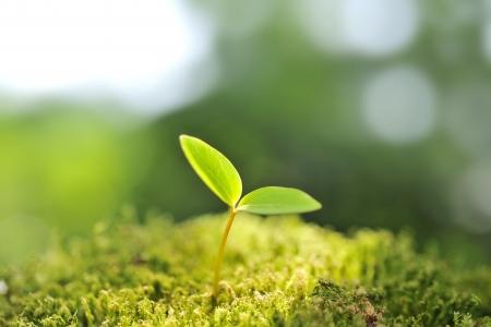 Photo pour Green seedling of new life concept - image libre de droit