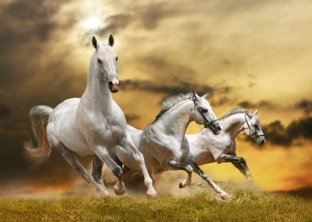 Photo pour white horses - image libre de droit