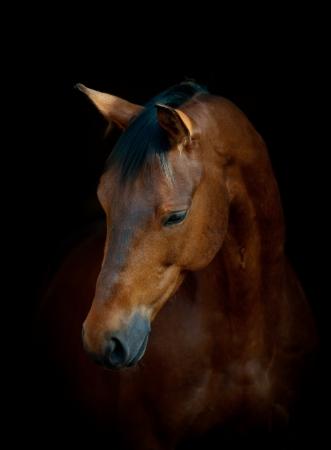 Photo pour horse on black - image libre de droit