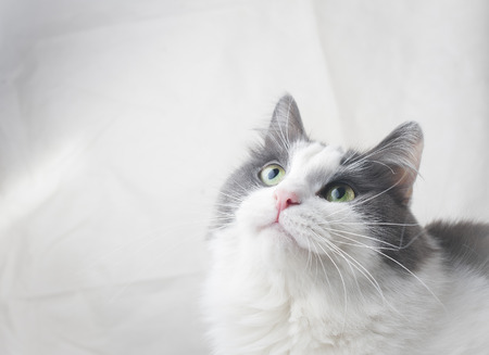 Photo for curious cat looking up, studio shot - Royalty Free Image