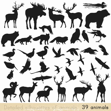 Photo for Collection of vector detailed silhouettes of forest animals - Royalty Free Image