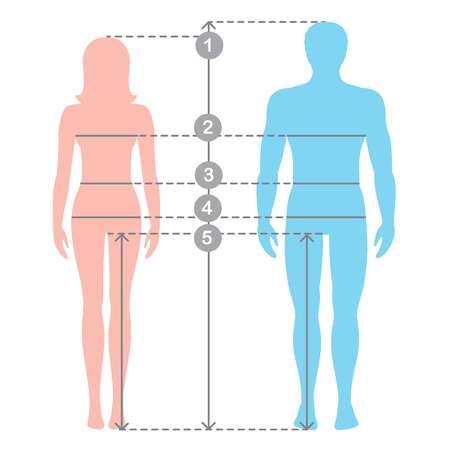 Illustrazione per Silhuettes of man and women in full length with measurement lines of body parameters . Man and women sizes measurements. Stock vector cartoon illustration. Human body measurements and proportions. - Immagini Royalty Free