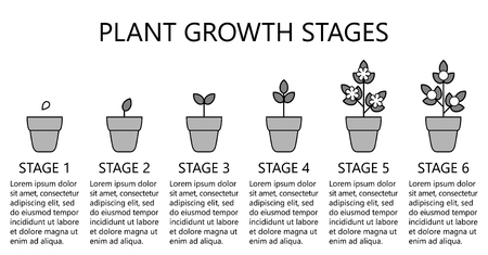 Ilustración de Plant growth stages infographics. Line art icons. Planting instruction template. Linear style illustration isolated on white. Planting fruits, vegetables process. Flat design style. - Imagen libre de derechos
