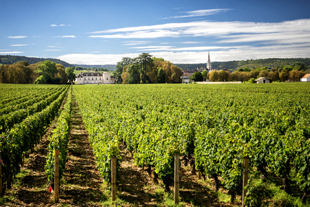 Photo for Burgundy, Montrachet. Chateau de Meursault. Cote d'Or. france - Royalty Free Image