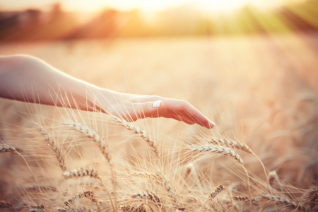 Foto für Female farmer hand over wheat field with sunlight on background - Lizenzfreies Bild