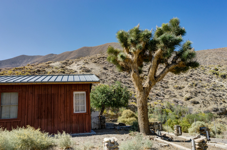 Photo pour Joshua Tree with house and blue sky in Death Valley National Park - image libre de droit