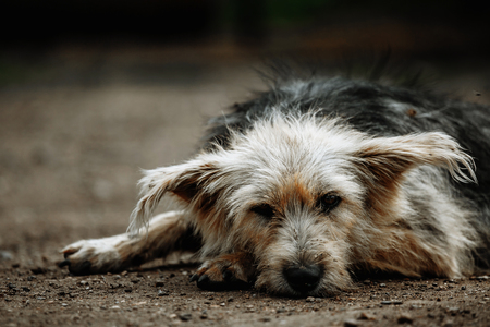 Foto de stray, diseased and poorly dog. Homeless dog outside - Imagen libre de derechos
