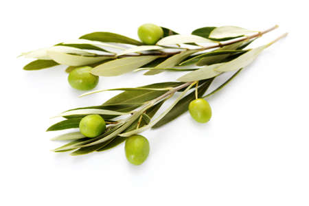 Photo pour olive branch on white background - food and drink - image libre de droit