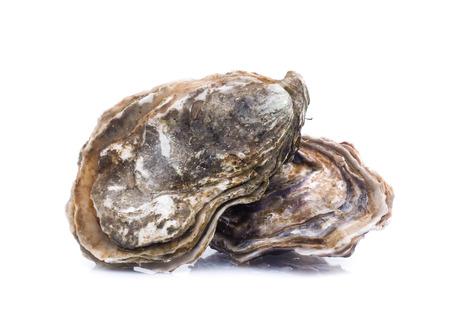 Photo pour Fresh  oyster on white background - image libre de droit