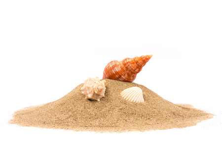 Foto de Isolated seashell on sand white background - Imagen libre de derechos
