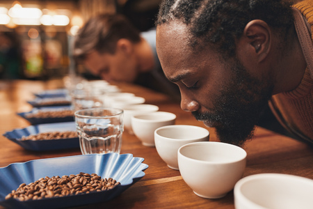 Foto de Cropped shot of a two men smelling the aroma of freshly ground coffee at a tasting session, leaning over a wooden counter set with neat rows of cups, glasses and containers of roasted coffee beans - Imagen libre de derechos