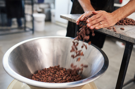 Foto de Worker pushing cocoa beans into a bowl for chocolate production - Imagen libre de derechos