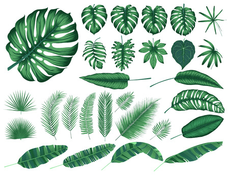 Illustration for Detailed tropical leaves and plants, vector collection isolated elements - Royalty Free Image